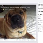 Le nuove statistiche delle pagine Facebook piu' orientate sull'engagement