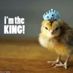 Twitter il re della TV: le nuove importanti scoperte!
